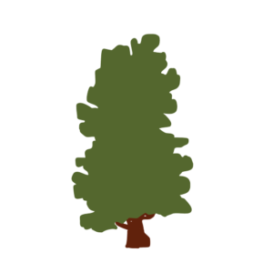 Zirbelkiefer Avatar